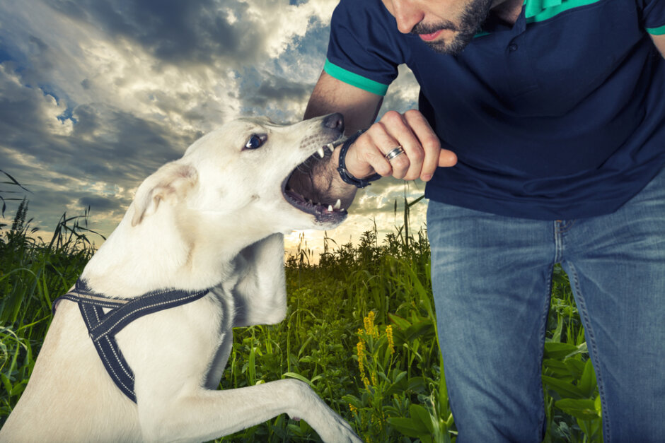 When the Dog Bite is Bigger than the Bark! on Campoli, Monteleone & Mozian, P.C. Attorneys, Personal Injury, Real Estate, Employment, Criminal Defense, Divorce and Family lawyers, Pittsfield, Great Barrington and North Adams